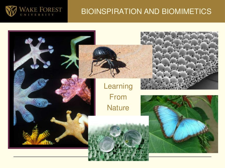 wakeforest-bioinspirationbiomimetics-open2011-110325103141-phpapp01-thumbnail-4.jpg